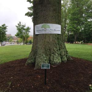 charlottesville area tree stewards