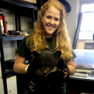 Lindsay Wentzel studies false pregnancy in black bears as part of the Fralin Life Science Institute's Summer Undergraduate Research Fellowship. Photo courtesy of Lindsay Wentzel.