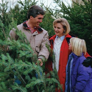 Virginia Grown Christmas tree