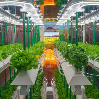 Some Ideas on Hydroponic Gardening Indoors You Should Know