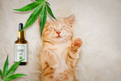 cbd stress cats