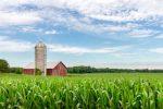 farm corn